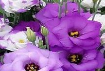 virágok (blooms and flowers) / szemet gyönyörködtető növények