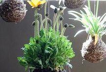 Szobanövények (indoor plants) / szobában tartott növények