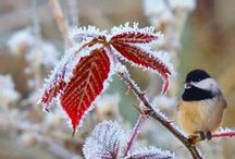 Cold And Frosty / by Rebecca
