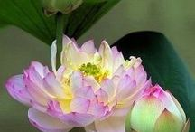 ****pretty*petals**** /   / by Jeanne Grace