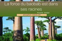 Citations du monde / Proverbe et citation du monde : Afrique, chine, etc..