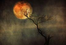 Hallowe'en / by Pam Kathryn