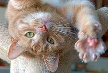 Gatti Gattoni e mici