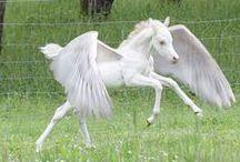 Cavalli Alati/Pegasus