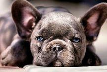 Puppies | Tenderness