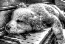 Bei Cani e Canidi vari