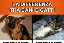 Differenze tra cani e gatti