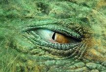 Lohikäärmejahdissa