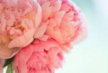 Kukkien kielellä