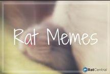 Rat Memes / Memes of Rats!