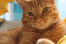Just Ginger Cats / Love the ginger cats