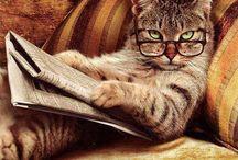 Cat life / Stuff for kitties