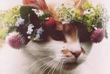 Floral Head Pieces / by Bella Umbrella