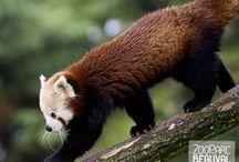 Sur les Hauteurs de Chine / Partez aux confins de la terre et découvrez les régions méconnues de la Chine... au ZooParc de Beauval !