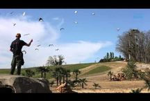"""Spectacle d'oiseaux """"Les Maîtres des Airs"""" ! / Dans une ambiance musicale et rythmée, pélicans, grues, cigognes, ibis, et marabouts se joignent au ballet aérien des rapaces. Un spectacle envoûtant rassemblant près de 200 oiseaux dans un décor naturel !"""