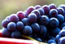I nostri prodotti / Vini di artigiani che producono nel rispetto della tradizione e della cultura italiana.