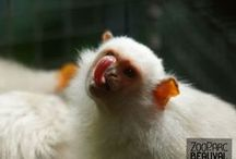 Drôles d'animaux ! / Les animaux de Beauval sont surprenants et ne manquent jamais de nous faire rire… la preuve en images !