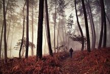 Inspire me: Forest