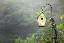 Bird-feeders