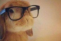 Honey bunny / I'm bunny lover