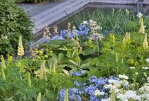Designer gardens as a celebration for Chelsea Flower Show & Chelsea in Bloom / The Chelsea Flower Show runs from 23-27 May. To celebrate here's our board of beautiful gardens and gardening ideas as well as images for past Chelsea in Bloom festivals.