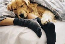 Pets - always