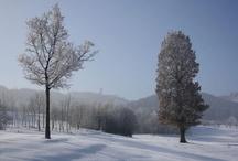 ROBINSON Winterwunderland