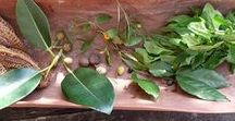 Herbs & Garden