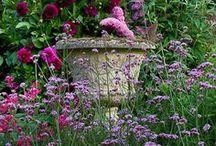 Dans un jardin rose