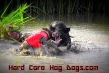 HCHD / Hog Dog Hunting / by Hard Core Hog Dogs