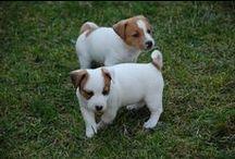 Cuccioli / Per intenerire anche i cuori piu' duri
