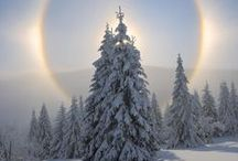 Winter Trees / Beautiful pictures of trees in winter.  Snowy trees, trees with the winter glow, and more.