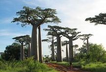Types Of Trees / Pictures of different tree species from around the world.