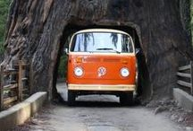 Tree Destinations / Travel destinations that involve trees and forests.