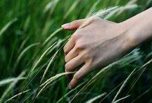 La bellezza in un filo d'erba