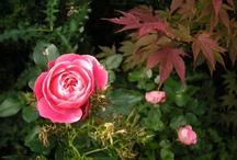 Fotos - Blüten