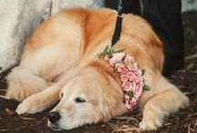 Wedding & Animals / Put you're pet on the guest list!