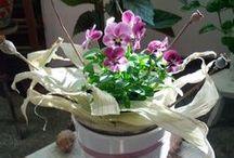 Virág & Dekoráció