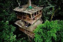 Maisons et arbres / Maisons extraordinaires construites dans des arbres