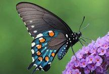 Insectes / Grands, gros, petits, mignons, terrifiants, volants ... à vous de qualifier nos amis les bêtes