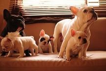 My pups