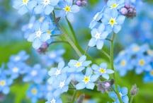 Flores / Flores Maravilhosas que iluminam nossas vidas!!!
