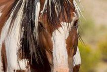 horses / by Deborah Bender