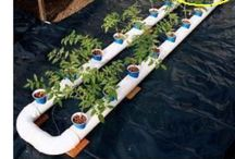 Aqua & hydroponics