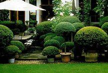 Puutarha & talo/ Garden & house