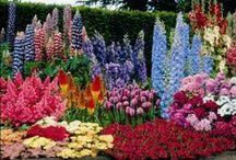 Дом Цветы