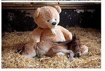 Ursa Minor & Little Animals