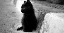 Cat, Chat, Koshka