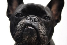 Cute Dogs / by Tattoo Harley Mamma