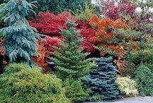 Garden/landscaping / by John Leonard